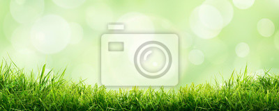 Image A fresh spring sunny garden background of green grass and blurred foliage bokeh.