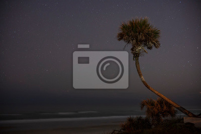 A palm tree grows along the Atlantic coast, photographed during a clear night sky among the stars and motion-blurred waves crashing in Daytona Beach, Florida.