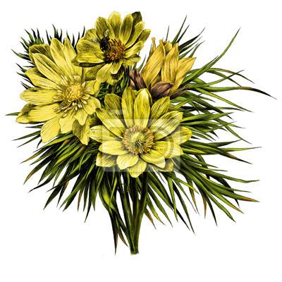 Adonis Fleur Branche Sprout Petales Un Bouquet Ensoleille Lumineux