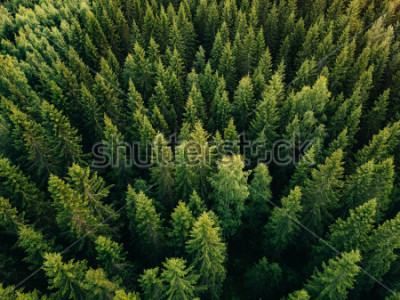 Image Aerial top view of summer green trees in forest in rural Finland. Drone photography