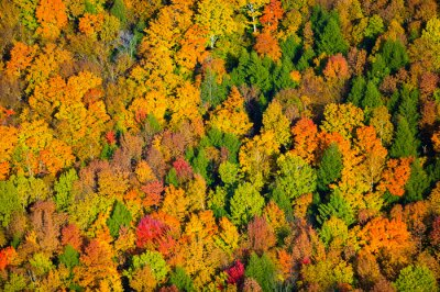 Image Aerial view of fall foliage in Vermont.