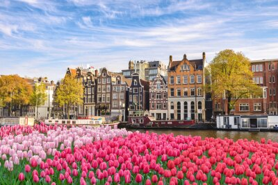 Image Amsterdam Netherlands, city skyline Dutch house at canal waterfront with spring tulip flower