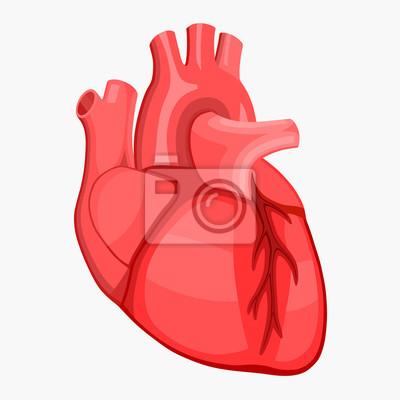 Coeur Humain Photo anatomie du coeur humain rouge peintures murales • tableaux rythme