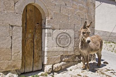 Ane en cappadoce - turquie peintures murales • tableaux mule, utile ... cab4cf5389f