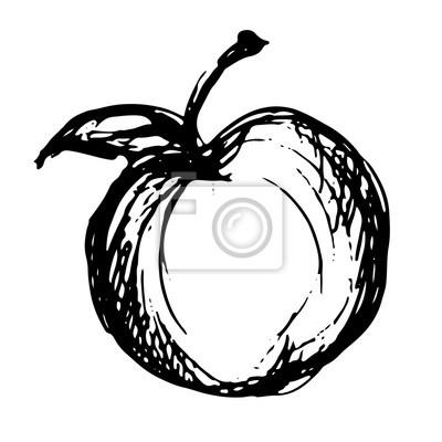 Apple, croquis