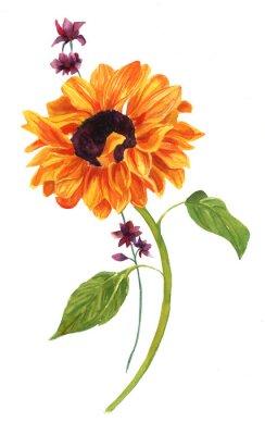 Image Aquarelle, dessin, Doré, tournesol, vert, feuilles, blanc, backround