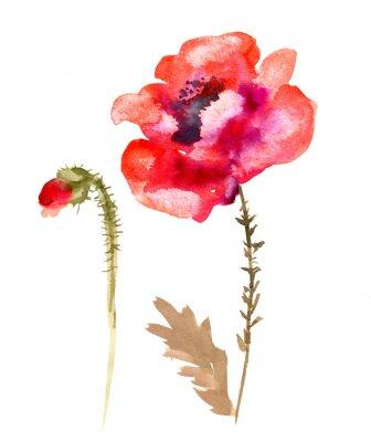 Image Aquarelle fleur coquelicot