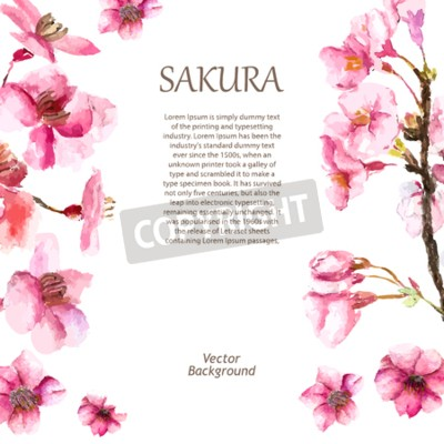 Aquarelle Fleur De Cerisier Main Dessiner Cerise Fleur Sakura Peintures Murales Tableaux Sakura Cerise Fleuriste Myloview Fr