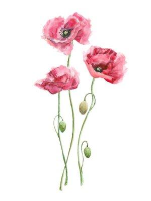 Image aquarelle fleurs rouges (coquelicots)