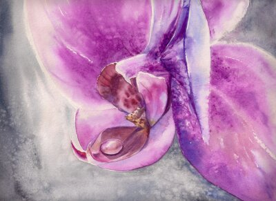 Image Aquarelle haletante de fleur d'orchidée rose avec petite goutte d'eau.
