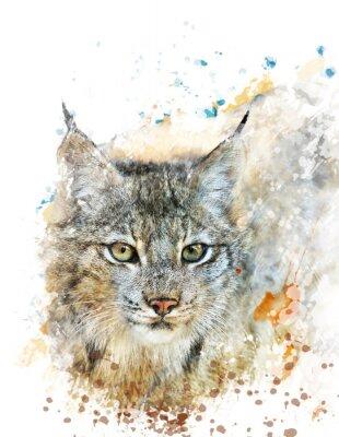 Image Aquarelle Image Of Lynx