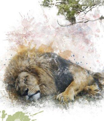 Image Aquarelle Image Of Sleeping Lion