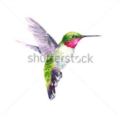 Image Aquarelle oiseau Colibri battant Illustration de jardin dessiné à la main isolé sur fond blanc