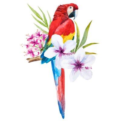 Image Aquarelle perroquet