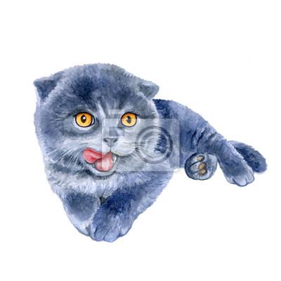 Aquarelle portrait de scottish fold cute chaton se lécher isolé sur fond blanc. Main, dessiné, doux, maison, pet. Des couleurs vives, un design réaliste. Conception de carte de voeux. Clipart. Lieu po
