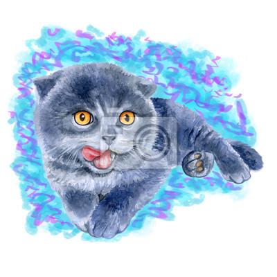 Aquarelle portrait de scottish fold cute chaton se lécher isolé sur fond bleu. Main, dessiné, doux, maison, pet. Couleurs vives, design réaliste. Conception de carte de voeux. Clipart. Lieu pour le te