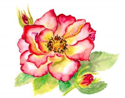 Image Aquarelle vintage rouge vif rose
