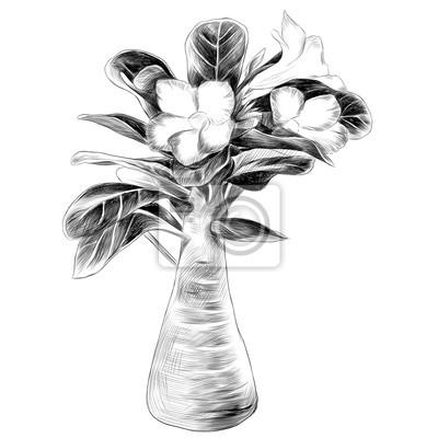 Arbre De Fleur Adenium Desert Rose Croquis Vecteur Graphique
