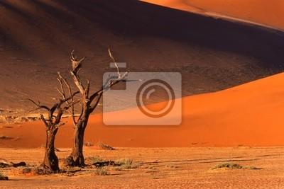 arbre et des dunes