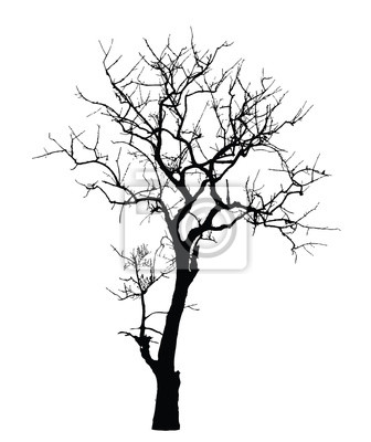 image arbre mort sans feuilles vecteur - Arbre Sans Feuille