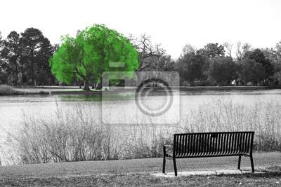Image: Arbre vert en scène de paysage noir et blanc avec un banc de