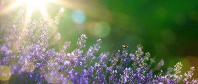 Image art d'été ou au printemps beau jardin de fleurs de lavande