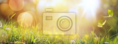 Image Art, résumé, ressort, fond, ou, Été, fond, à, frais, g