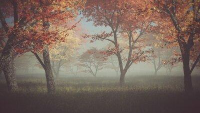 Image Autumn forest dans la brume.
