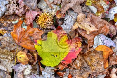 Image Autumn leaves sur un terrain