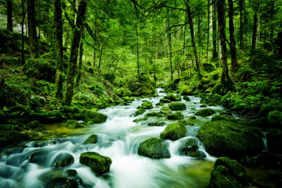 Image Bach dans la forêt
