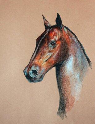 Image baie tête de cheval
