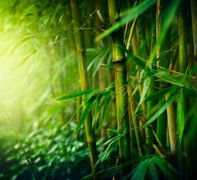 Image Bamboo