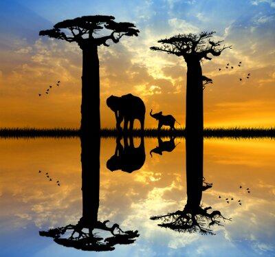 Image Baobab et l'éléphant au coucher du soleil