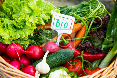 Basket with healthy bio vegetables ecological grown