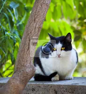 beau chat noir et blanc, assis sur un mur