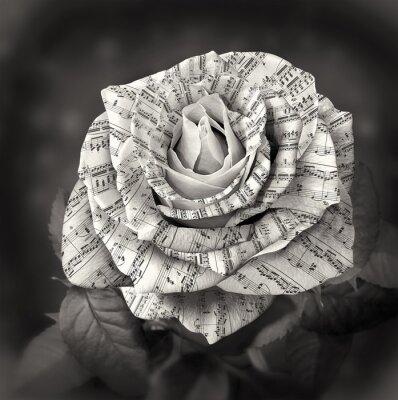 Image Beau, noir, blanc, rose, note, pétales