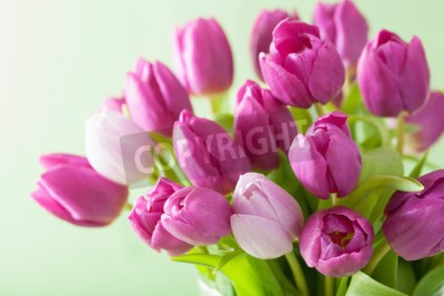 Image Beau, pourpre, tulipe, fleurs, fond