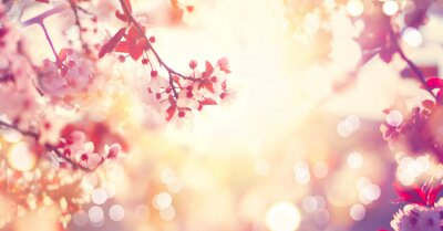 Image Beau, ressort, nature, scène, rose, fleurir, arbre