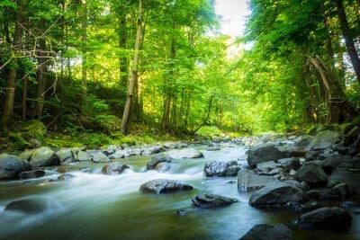 Image Beau, rêveur, montagne, ruisseau, forêt