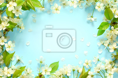 Image Beautiful spring nature background with lovely blossom, petal a on turquoise blue background , top view, frame. Springtime concept.