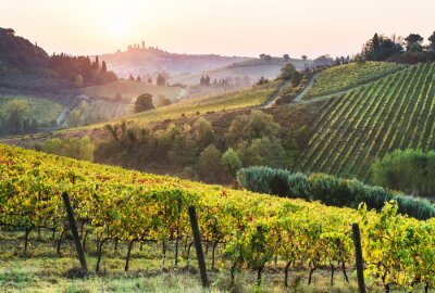 Image Beautiful valley in Tuscany, Italy. Vineyards and landscape with San Gimignano town at the background.