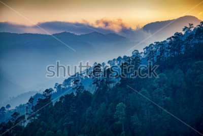 Image Beautiful view of Foggy pine forest and sunrise at himalaya range, Almora, Ranikhet, Uttarakhand, India.