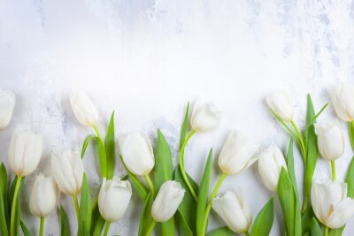 Image Beautiful white tulips flowers for holiday.