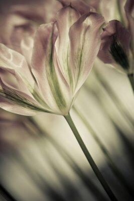 Image Beaux-arts de tulipes close-up, floue et nette