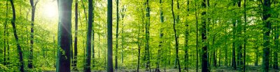 Image Beech Forest panorama paysage