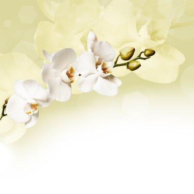 Image Belle orchidée blanche