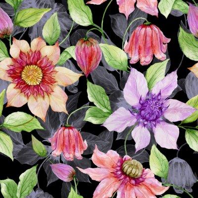 Image Belles fleurs de clématites sur les rameaux d'escalade sur fond noir. Motif floral sans soudure. La peinture à l'aquarelle. Illustration peinte à la main.