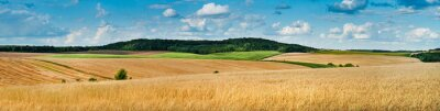 Image big panoramic view of landscape of wheat field, ears and yellow and green hills