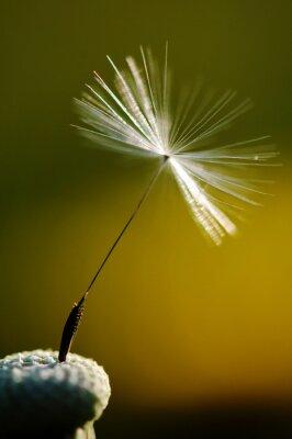 Image Blanc, fleurir, pissenlit, vert, fond, détail, macro, photographie, pissenlit, graine