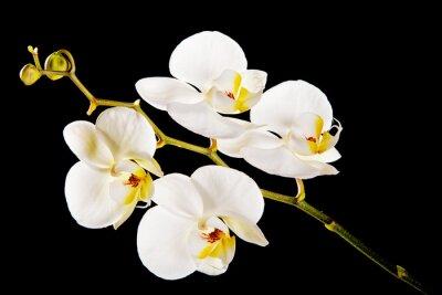 Image Blanc, orchidée, jaune, centre